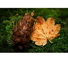 Maple and Douglas Fir Photographic Print
