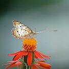Sweet Nectar by Donna Adamski
