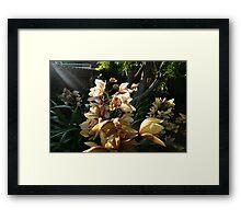 Orchid Spray 2 Framed Print