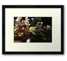 Orchid Spray 3 Framed Print