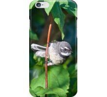 Grey Fantail iPhone Case/Skin