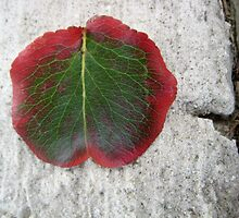 autumn leaf on small marble slab by Laurkat