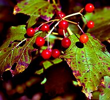 Fall Berries by Michael Wolf
