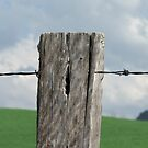 Fenced In by Cherie Carlson