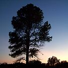 The Sunset Tree by Glenna Walker