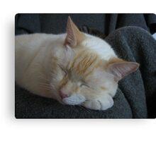 Sleeping bubba Canvas Print