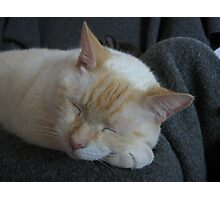 Sleeping bubba Photographic Print
