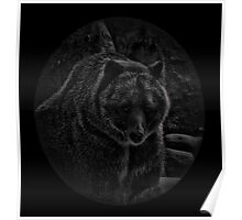 A Grizzly Bear  Poster