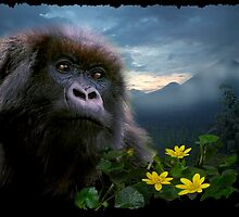 """Hope"" (Mountain Gorilla) by Skye Ryan-Evans"