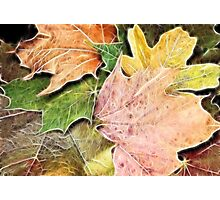 Fractal Fall Photographic Print