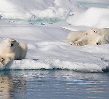 Respite On Ice by Steve Bulford