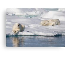 Respite On Ice Canvas Print