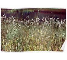 Grass Screen Poster