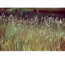Grass Screen Photographic Print