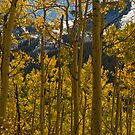 Aspen View by Angela  Ardis