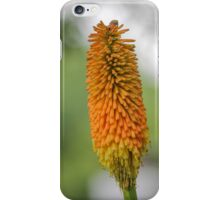 red hot poker plants iPhone Case/Skin