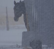 My horse Wally is shocked by the snow by conilouz