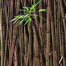 Bamboo Sprig by Randy Jay Braun