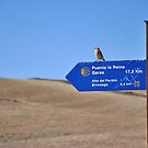 Bird on the Camino by Hilda Rytteke