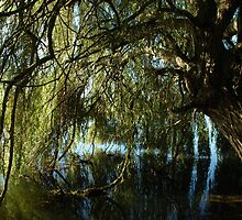 In Willows shade. by James Stevens