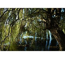 In Willows shade. Photographic Print