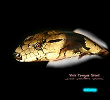 Pink Tounge Skink by Normf