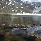 Summit Lake Rocks Mt. Evans by Daniel Doyle