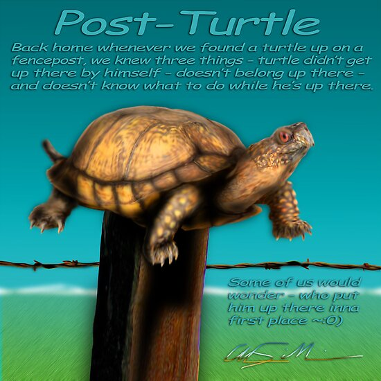 Post Turtle by ChasSinklier
