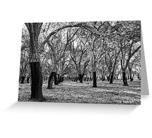 Oak Forest in Black and White Greeting Card