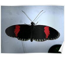Crimson Patched Longwing - Heliconius erato Poster