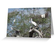 Little Egrets Greeting Card