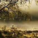 Enchanted by the morning mist by jchanders