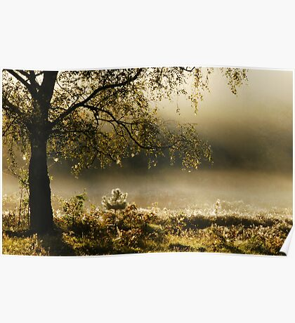 Enchanted by the morning mist Poster