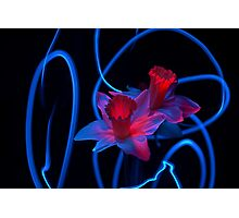 Electric Daffodils Photographic Print