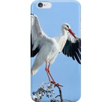 White Stork On Snow Covered Tree iPhone Case/Skin