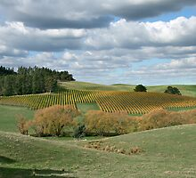 Autumnal Country Colours - Adelaide Hills by LeeoPhotography