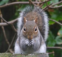 Spokesman for The Squirrel Party.. by Rivendell7