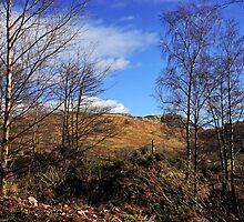 Ochil Hills by Jeremy Lavender Photography