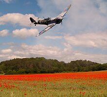 Spitfire Poppies  by J Biggadike