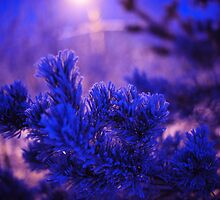 Evergreen Tree in Twilight by JennyRainbow