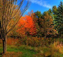 Autumn Fantasy by Ron Waldrop