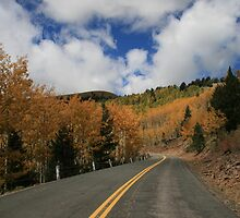 Ski Run Road on Sierra Blanca, Ruidoso New Mexico by Stacy Hamilton