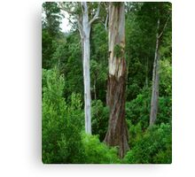 Mountain Ash, Otways. Canvas Print