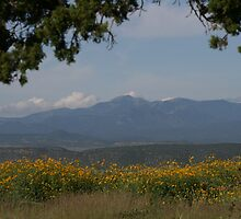 Sierra Blanca Mountain Range by Stacy Hamilton