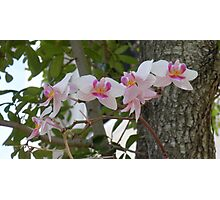 Orchid Bunch Photographic Print