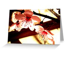 Blossoms and Shadows Greeting Card