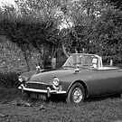 Sunbeam Alpine by Andre Gascoigne