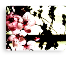 Blossoms and Shadows II Canvas Print