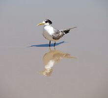 Mirror Image by Cherie Carlson