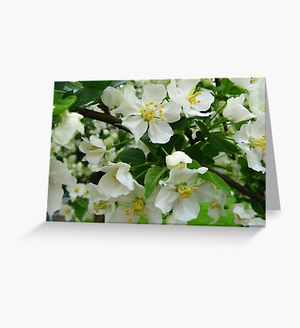 White Crabapple Blossoms Greeting Card